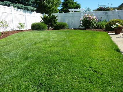 back-yard-250890_1920