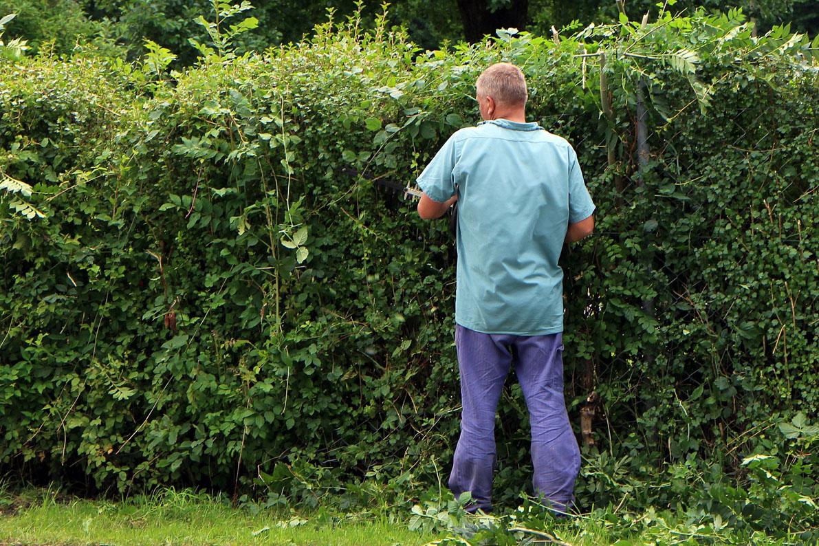 landscape-gardener-409148_1920