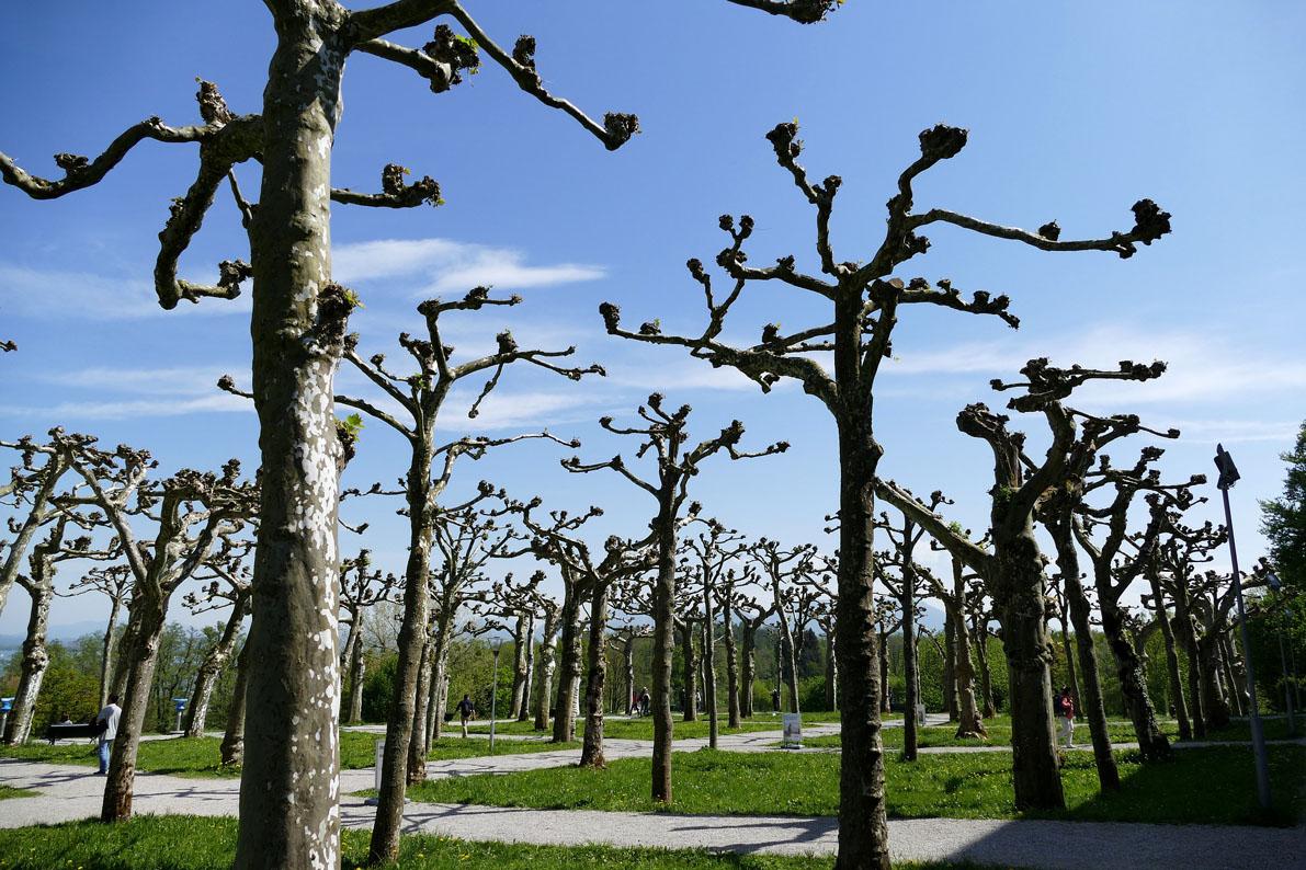 tree-pruning-3373997_1920