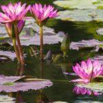 flowers-3538739_1920