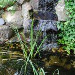 garden-pond-3646280_1920
