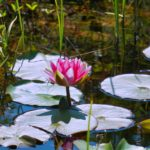 pond-4566770_1920