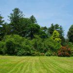 trees-3495399_1920